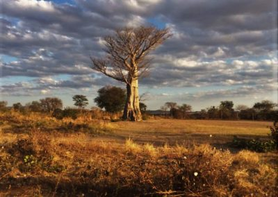 Der riesige Baobabbaum ist ein Wahrzeichen des Landes, Aufnahme: © Hilde Chistè